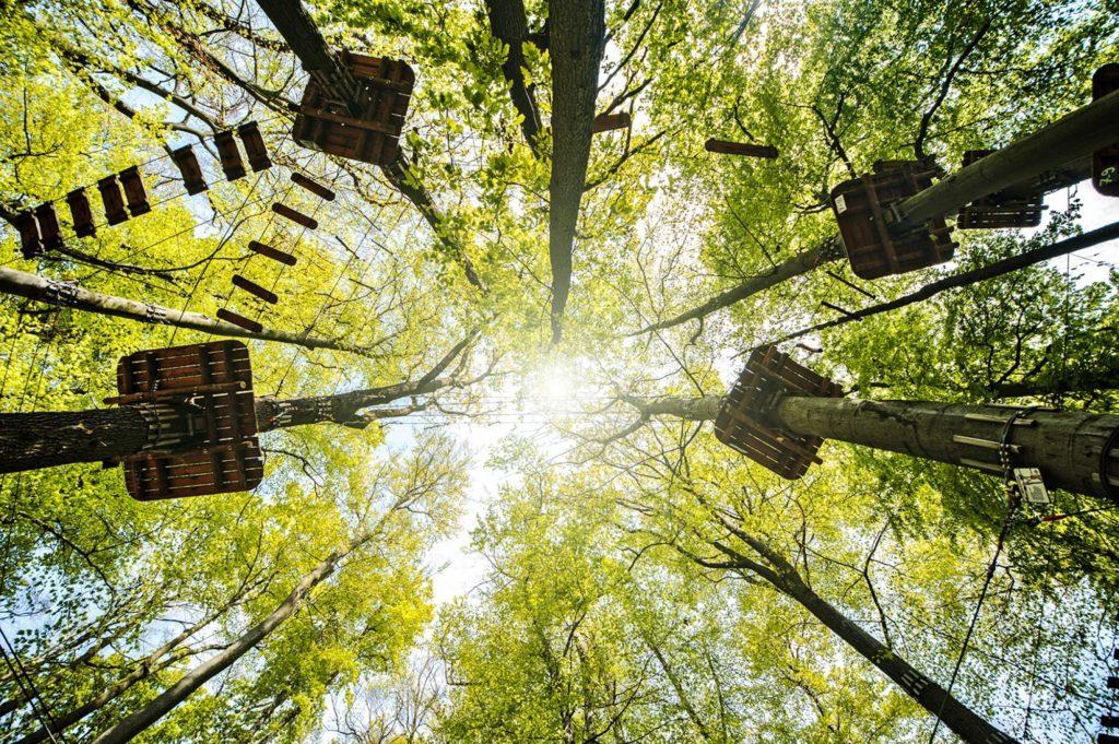 Activités dans le Luberon : parc d'accrobranche - Colorado Aventures